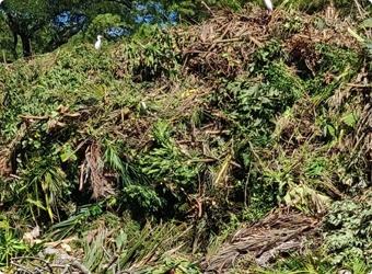 Green Waste/Debris